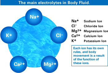 Reflecting on the normal and abnormal fluid distribution ...
